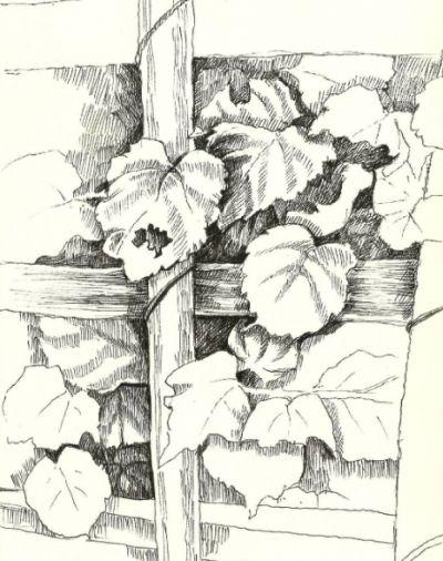 Sketch - Plants