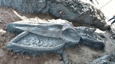 Thailand: Rare whale skeleton discovered