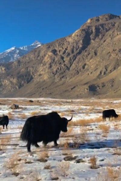 Life At Karakoram Mountains