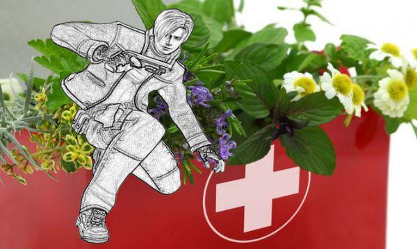 Sabias que hay plantas curativas que podemos utilizar como primeros auxilios.