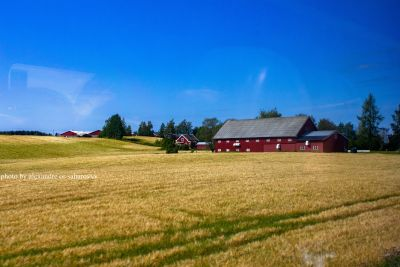 Norwegian farm on a sunny day. Photo from the train window