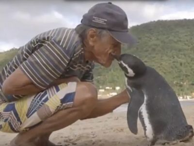 Inspiring Story of a Penguin- misreported and went viral