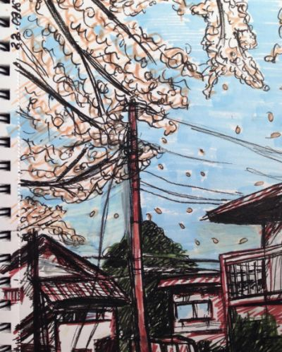 Japanese city. Sakura.