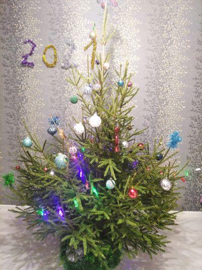 My christmas tree.