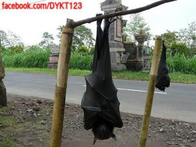 HUMAN SIZE BAT IN THE PHILIPPINES STARTLES SOCIAL MEDIA & SETS THE INTERNET ABLAZE !!!