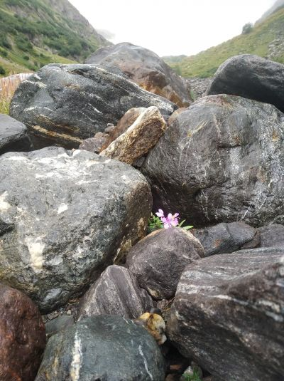 Flowers growing trough rocks