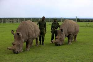 A Man who protect the last two Northern White Rhinos