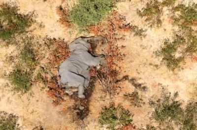 Mysterious Elephant death toll rises in Botswana