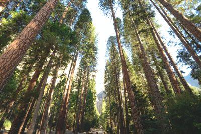 Plantar árboles usando las aplicaciones de Apps Planting Trees