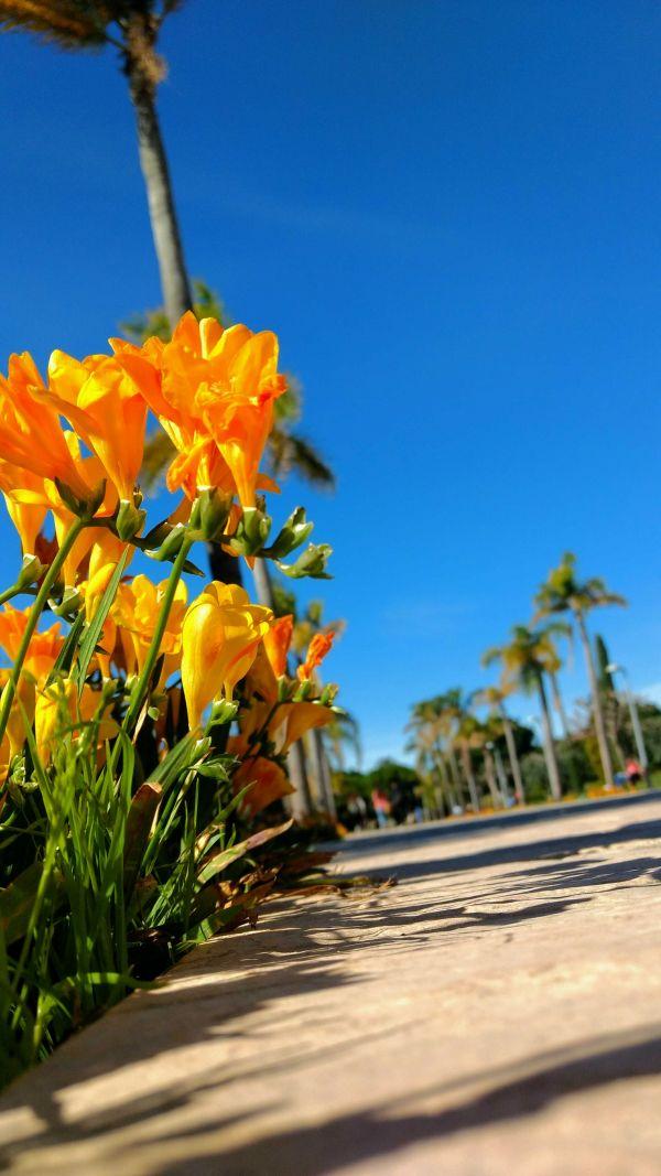 Se adelanta la primavera, buen clima a inicios de marzo en Alicante
