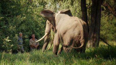 Elephants: 'My mission to stop poachers in Zimbabwe