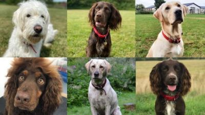 Coronavirus: Sniffer dogs trial going 'very well'